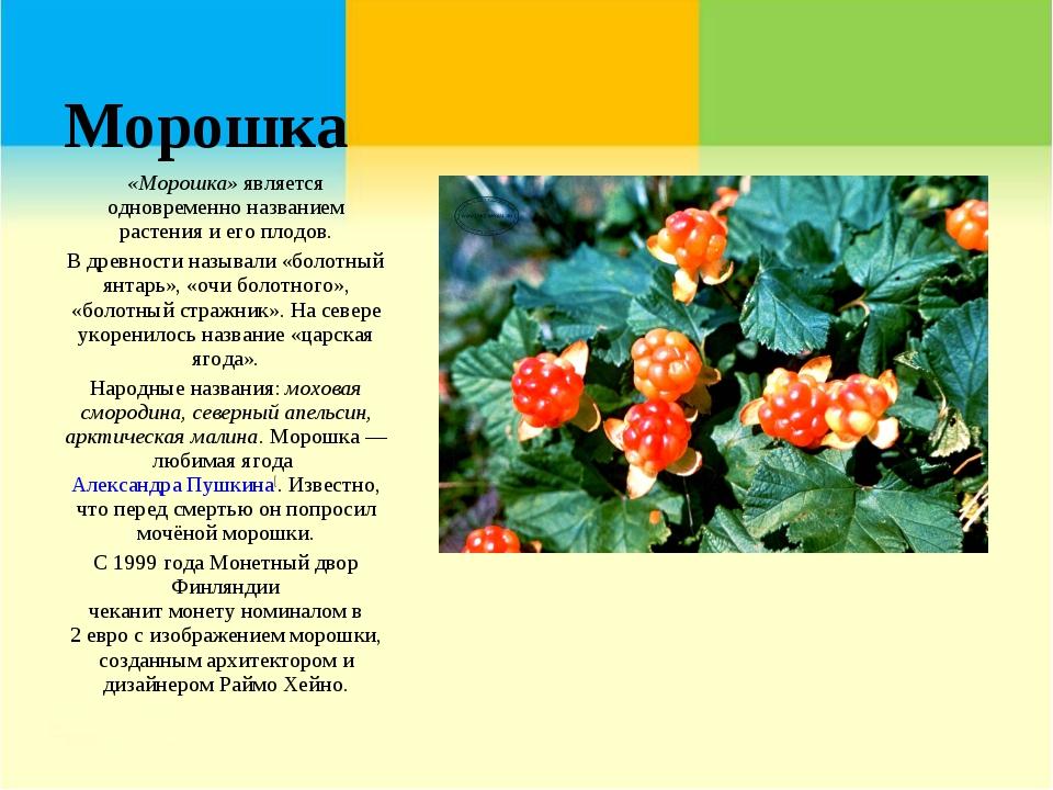 Морошка «Морошка»является одновременно названием растения и его плодов. В др...