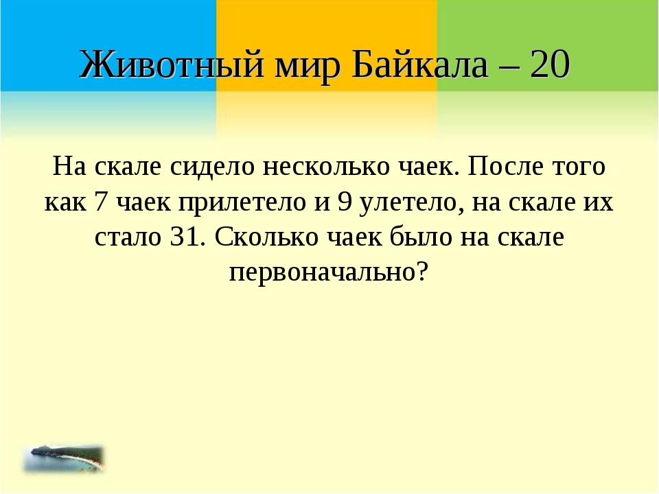 Животный мир Байкала – 20 На скале сидело несколько чаек. После того как 7 ча...