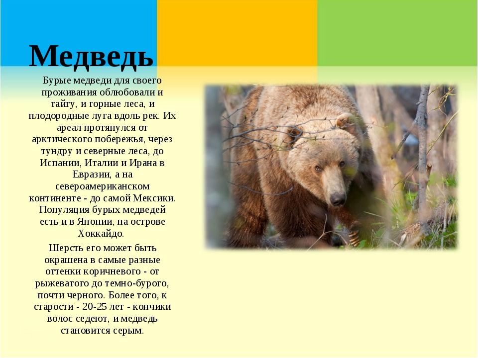 Медведь Бурые медведи для своего проживания облюбовали и тайгу, и горные леса...