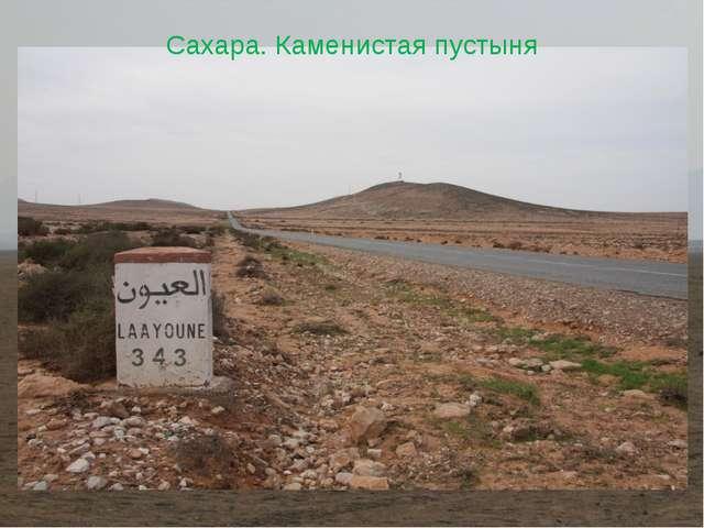 Сахара. Каменистая пустыня