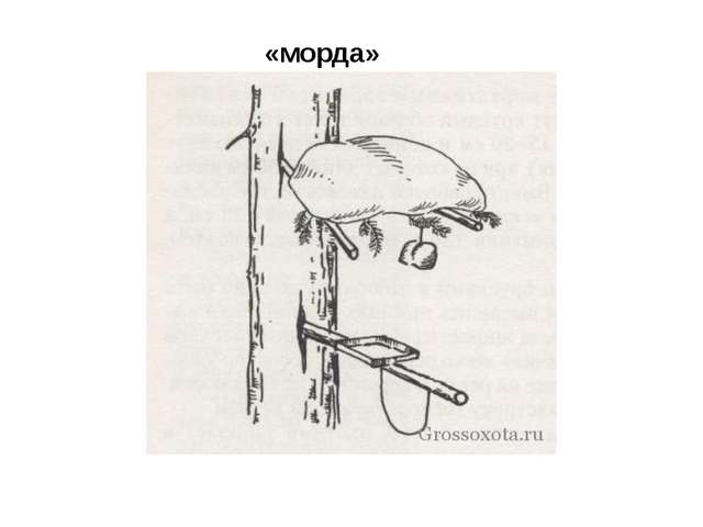 «морда»