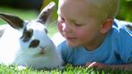 как правильно сбыть мясо кролика