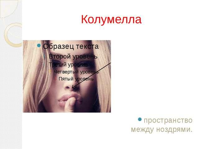 Колумелла пространство между ноздрями.