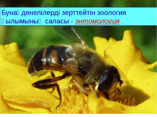 . Бунақденелілерді зерттейтін зоология ғылымының саласы - энтомология