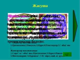 Жасуша Өсімдіктер жасушасында: 1.Цитоплазма;2.Вакуоль;3.Ядро;4.Пластидтер;5.Қ