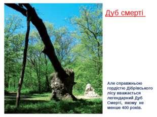 Дуб смерті Але справжньою гордістю Дібрівського лісу вважається легендарний Д