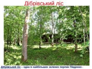 Дібрівський ліс Дібрівський ліс – одна із найбільших зелених перлин Південно