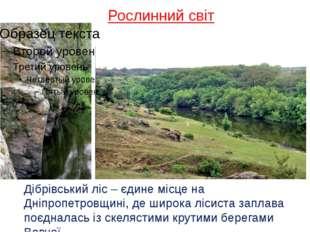 Рослинний світ Дібрівський ліс – єдине місце на Дніпропетровщині, де широка л