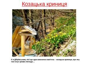 Козацька криниця Є в Дібрівському лісі ще одна визначна пам'ятка - козацька к