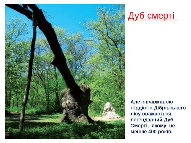 Дуб смерті Але справжньою гордістю Дібрівського лісу вважається легендарний Д...