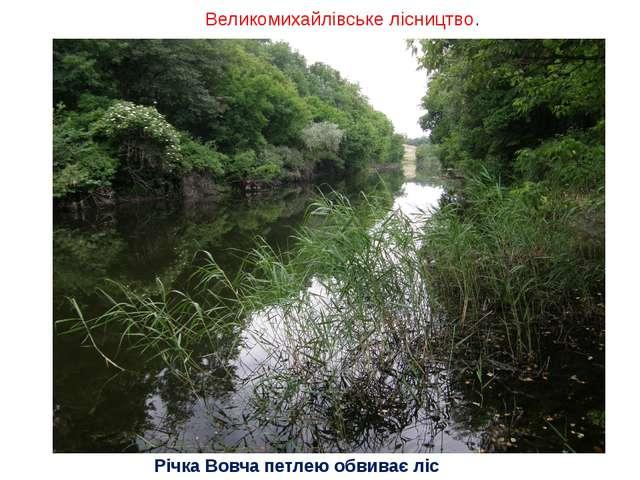 Великомихайлівське лісництво. Річка Вовча петлею обвиває ліс