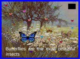 Butterflies are the most beautiful insects