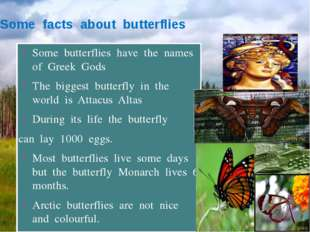 Some facts about butterflies Some butterflies have the names of Greek Gods Th