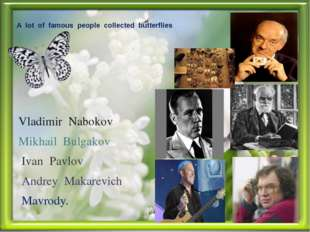 A lot of famous people collected butterflies Vladimir Nabokov Mikhail Bulgako