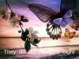 They do not sleep at night
