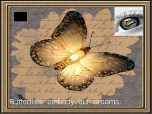 Butterflies embody our dreams.