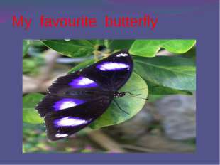 My favourite butterfly