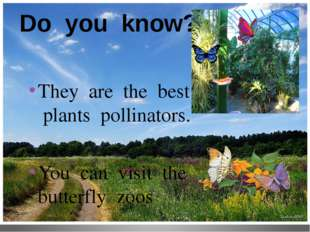 Do you know? They are the best plants pollinators. You can visit the butterfl