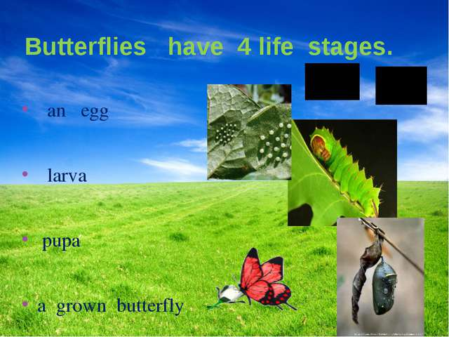 Butterflies have 4 life stages. an egg larva pupa a grown butterfly