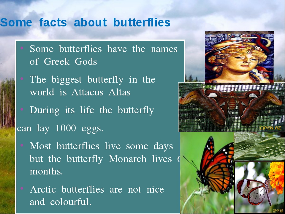 Some facts about butterflies Some butterflies have the names of Greek Gods Th...