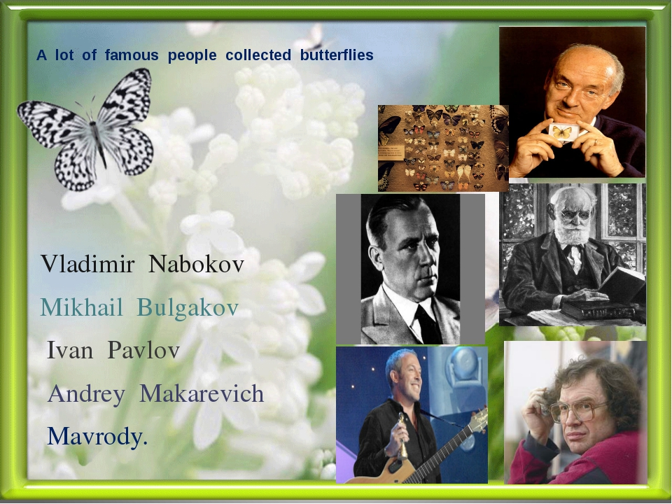 A lot of famous people collected butterflies Vladimir Nabokov Mikhail Bulgako...