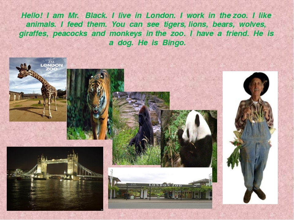 Hello! I am Mr. Black. I live in London. I work in the zoo. I like animals. I...