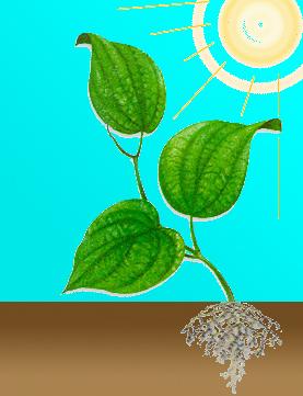 Способы питания растений