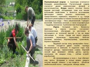 Растительный покров п. Быкогорка отличается большим разнообразием. Растительн