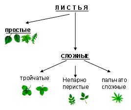 http://festival.1september.ru/articles/607639/img3.jpg