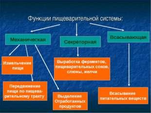 Функции пищеварительной системы: Механическая Секреторная Всасывающая Измельч