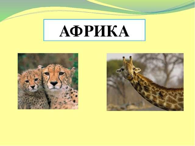АФРИКА Подготовила учитель географии Крехтунова Любовь Николаевна