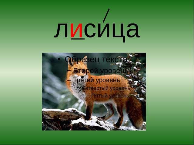 лисица