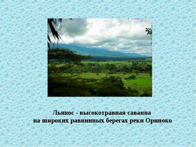 Льянос - высокотравная саванна на широких равнинных берегах реки Ориноко