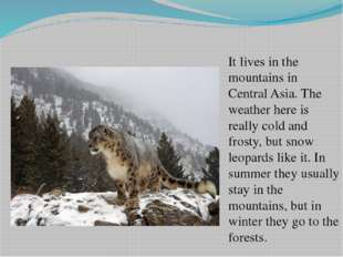 It lives in the mountains in Central Asia. The weather here is really cold an