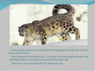 Some people say that snow leopards are not dangerous for people, but we don`