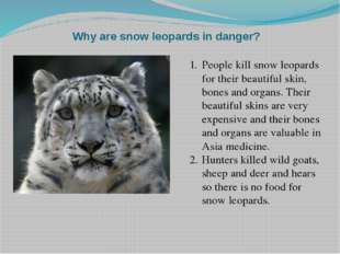 Why are snow leopards in danger? People kill snow leopards for their beautifu