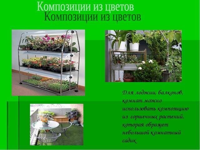 Для лоджии, балконов, комнат можно использовать композицию из горшечных расте...