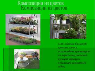 Для лоджии, балконов, комнат можно использовать композицию из горшечных расте