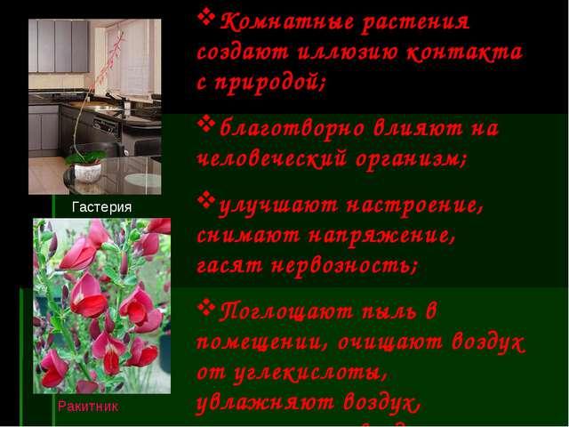 Ракитник Комнатные растения создают иллюзию контакта с природой; благотворно...