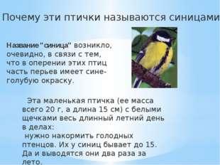 """Почему эти птички называются синицами? Название """"синица"""" возникло, очевидно"""
