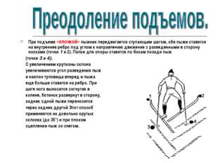 При подъеме «елочкой» лыжник передвигается ступающим шагом, обе лыжи ставятся