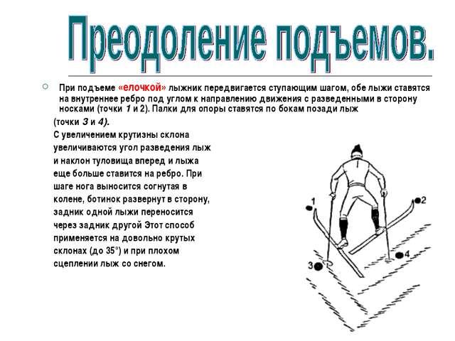 При подъеме «елочкой» лыжник передвигается ступающим шагом, обе лыжи ставятся...
