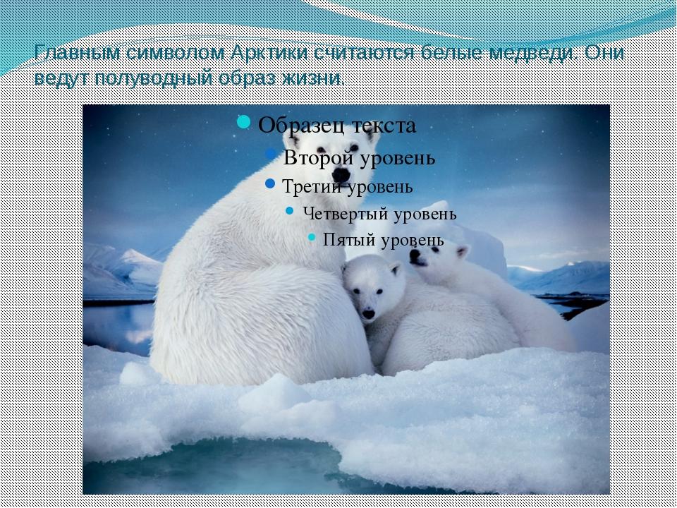 Главным символом Арктики считаются белые медведи. Они ведут полуводный образ...