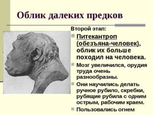 Облик далеких предков Второй этап: Питекантроп (обезъяна-человек), облик их б