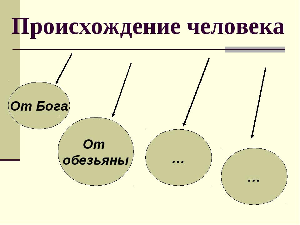 Происхождение человека От Бога От обезьяны … …