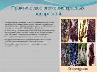Практическое значение красных водорослей Некоторые виды используют как сырье