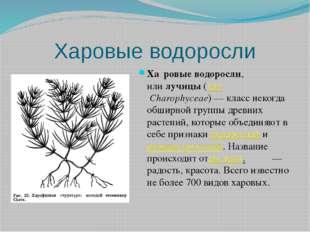 Харовые водоросли Ха́ровые водоросли, илилучицы(лат.Charophyceae)— класс