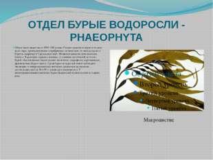 ОТДЕЛ БУРЫЕ ВОДОРОСЛИ - PHAEOPHYTA Общее число видов около 1500 (190 родов).