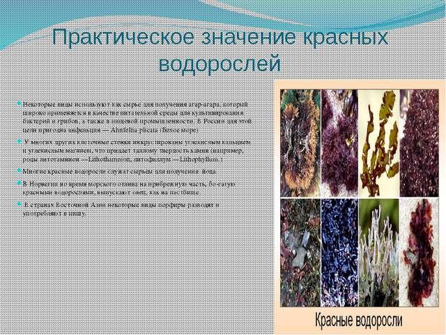 Практическое значение красных водорослей Некоторые виды используют как сырье...