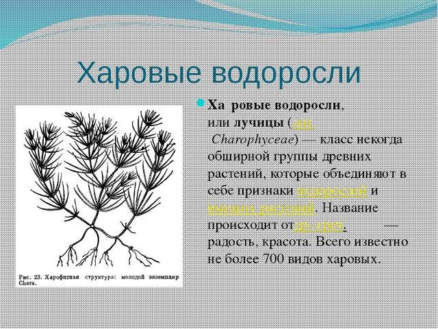 Харовые водоросли Ха́ровые водоросли, илилучицы(лат.Charophyceae)— класс...